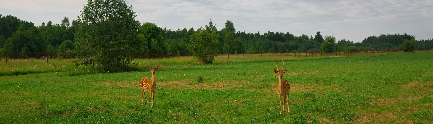 Животные на Вазузе
